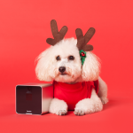 Petcube_Camera_For_Christmas