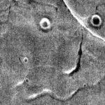марс лице