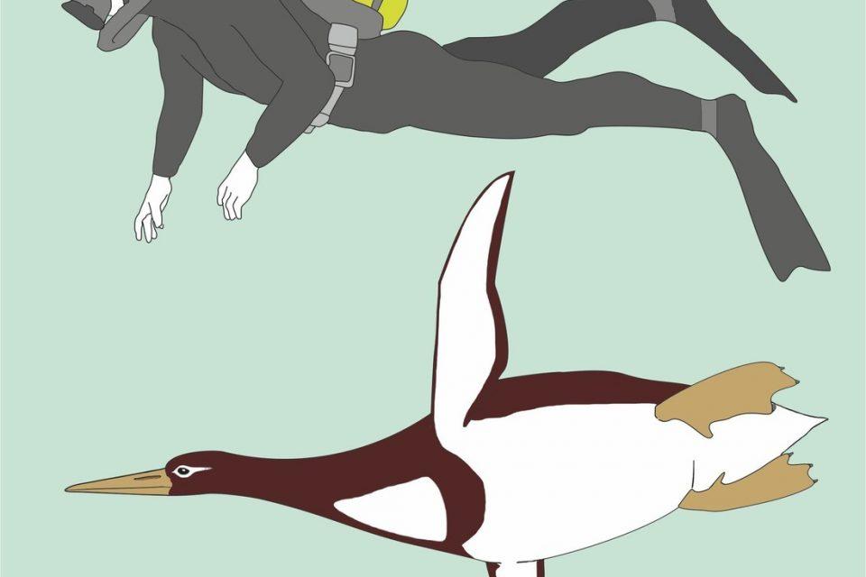 Древен пингвин бил голям колкото човек