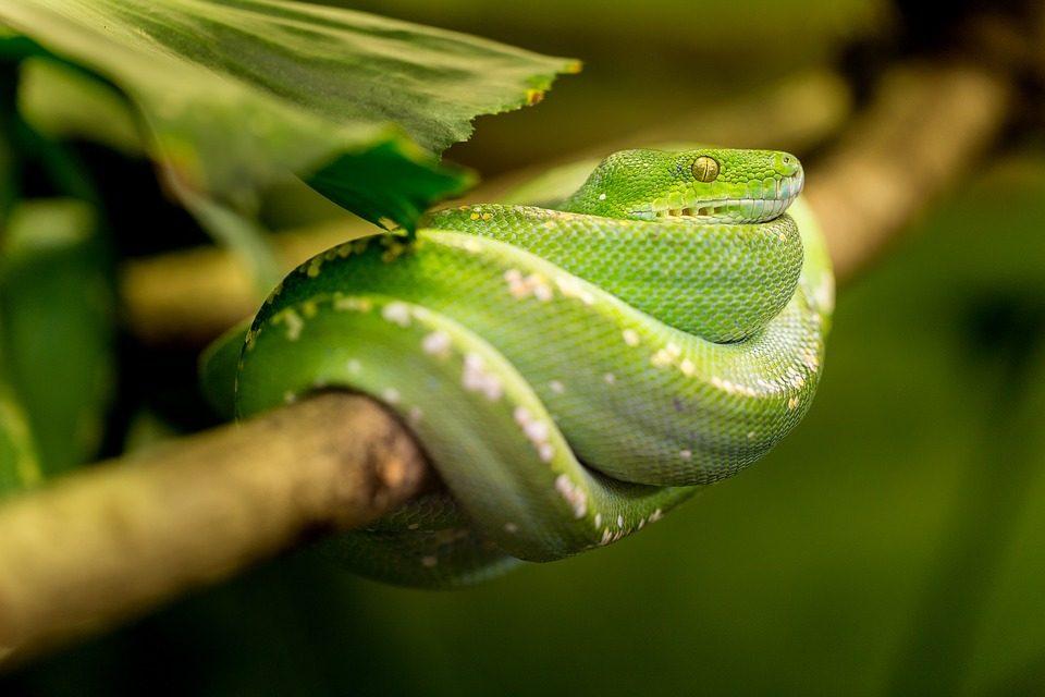 Роботизирана змия улеснява търсенето и спасяването на хора
